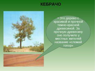 КЕБРАЧО Это дерево с красивой и прочной темно-красной древесиной. За прочную