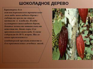 Характерны для южноамериканского тропического леса виды шоколадного дерева с
