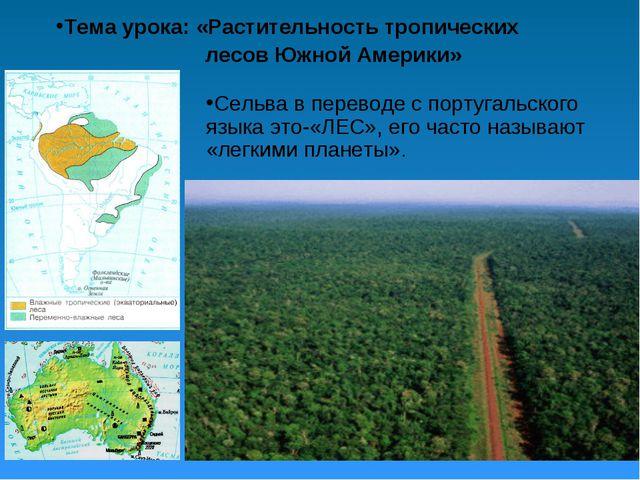 Тема урока: «Растительность тропических лесов Южной Америки» Сельва в перевод...