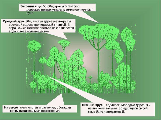 Верхний ярус 50-60м, кроны гигантских деревьев не пропускают к земле солнечны...