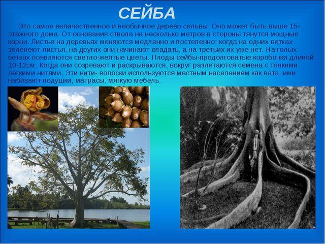 СЕЙБА Это самое величественное и необычное дерево сельвы. Оно может быть выш...