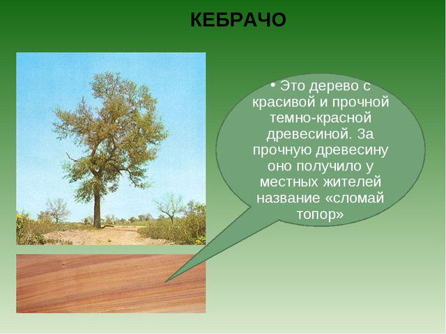 КЕБРАЧО Это дерево с красивой и прочной темно-красной древесиной. За прочную...