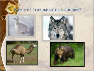 Какое из этих животных лишнее?