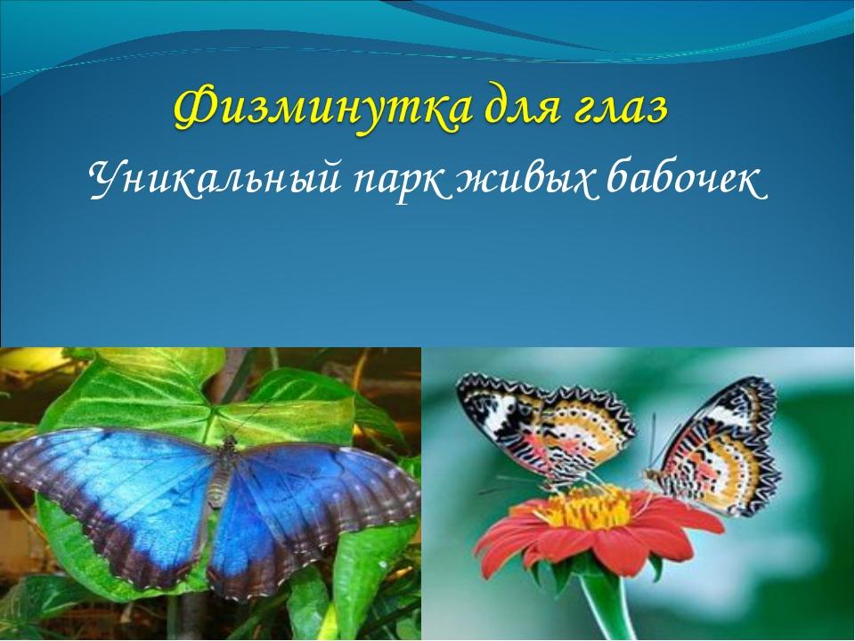 Уникальный парк живых бабочек