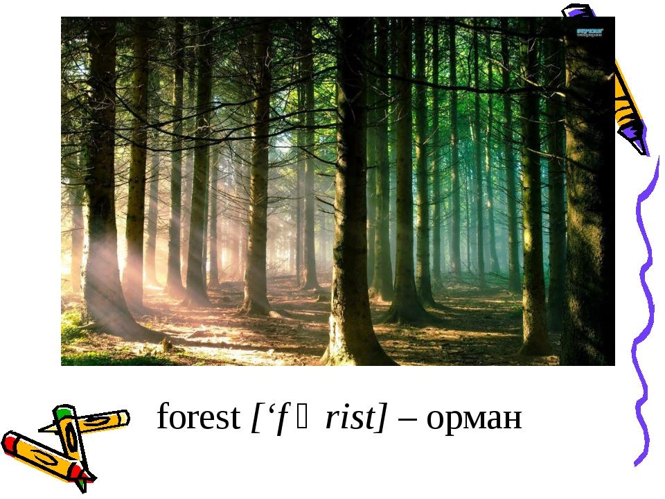 forest ['f ᴐ rist] – орман
