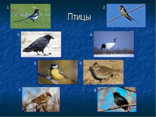 Птицы 1 2 3 4 5 6 7 8