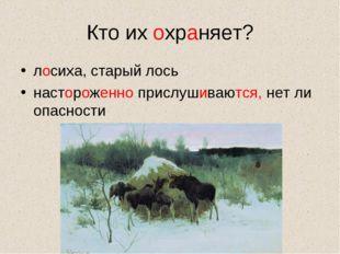 Кто их охраняет? лосиха, старый лось настороженно прислушиваются, нет ли опас