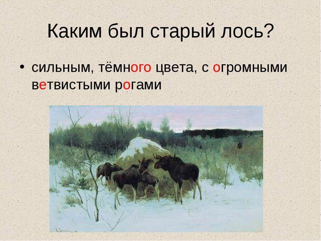 Каким был старый лось? сильным, тёмного цвета, с огромными ветвистыми рогами