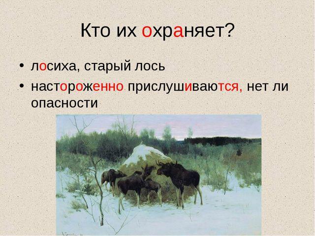 Кто их охраняет? лосиха, старый лось настороженно прислушиваются, нет ли опас...