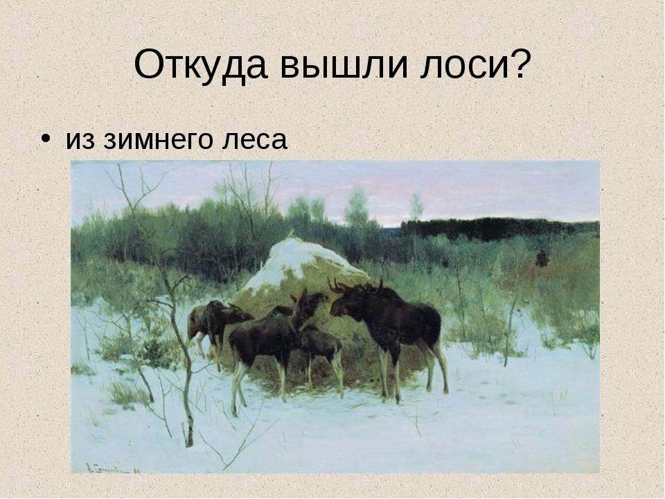 Откуда вышли лоси? из зимнего леса