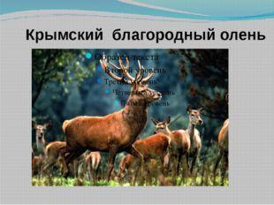Крымский благородный олень