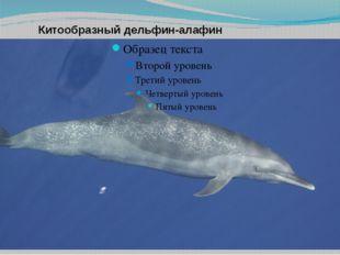 Китообразный дельфин-алафин