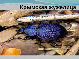 Крымская жужелица