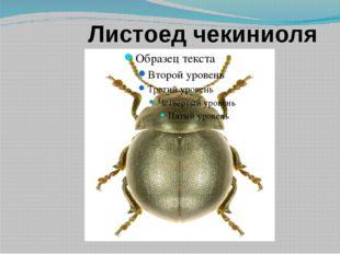 Листоед чекиниоля