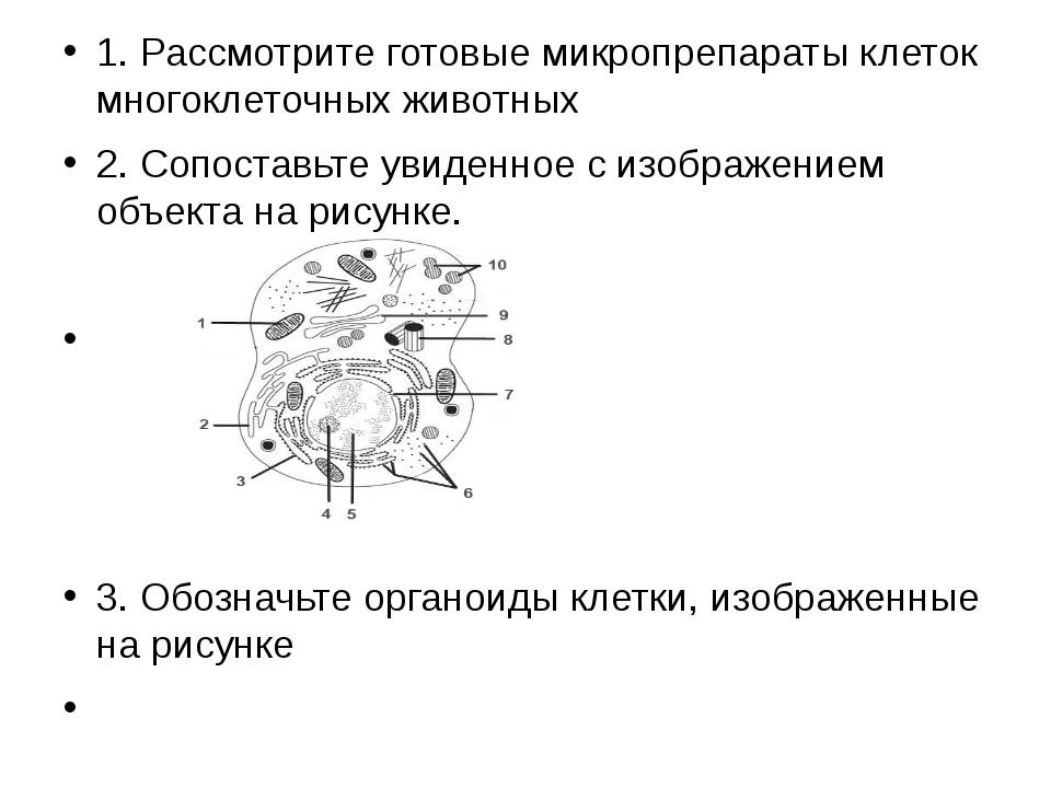 1.Рассмотрите готовые микропрепараты клеток многоклеточных животных 2.Сопо...