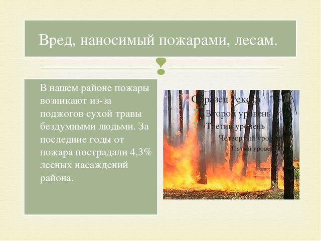 Вред, наносимый пожарами, лесам. В нашем районе пожары возникают из-за поджог...