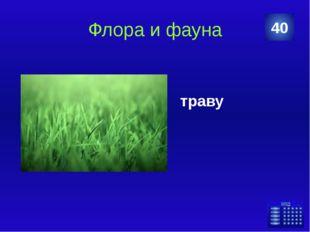 Города и страны Назовите город, в котором погиб Александр Грибоедов 50 Ответ