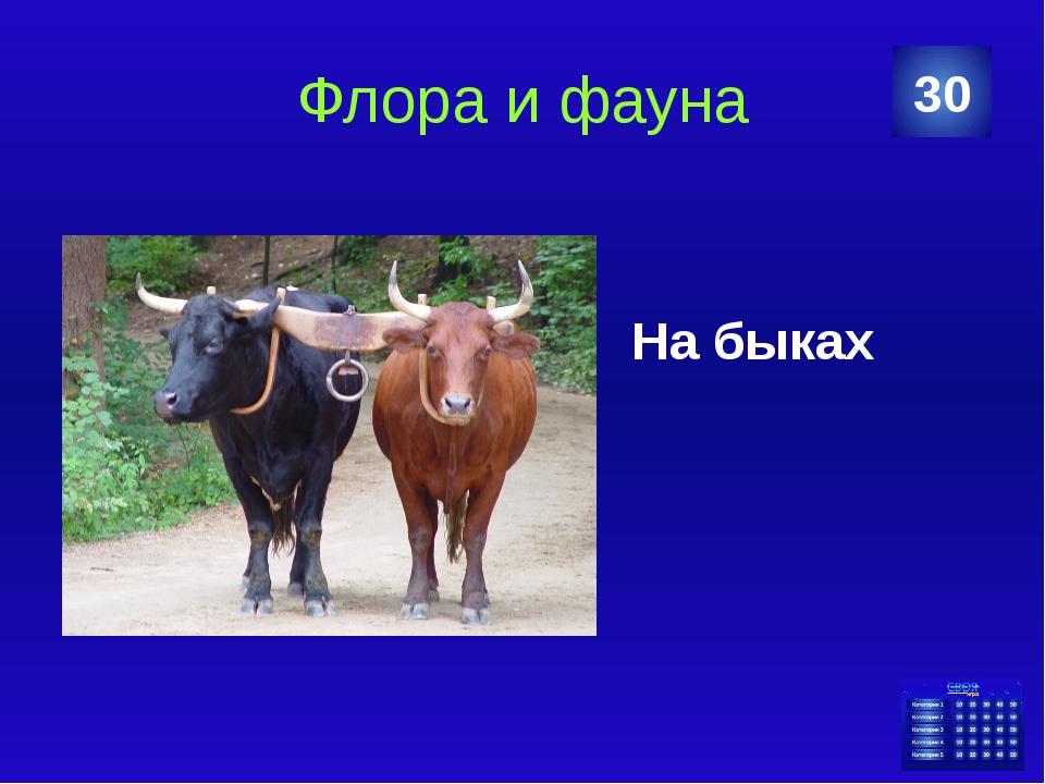 Флора и фауна На быках 30