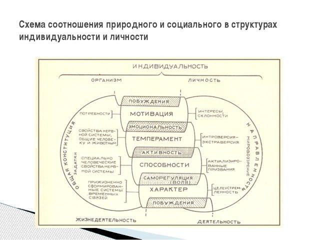 Схема соотношения природного и социального в структурах индивидуальности и ли...