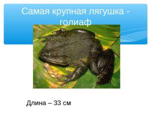 Самая крупная лягушка - голиаф Длина – 33 см