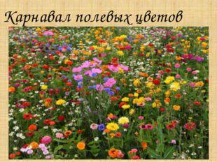 Карнавал полевых цветов