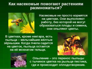 Как насекомые помогают растениям размножаться? Насекомые не просто кормятся н