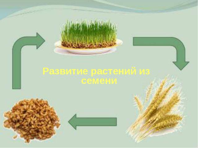 Развитие растений из семени