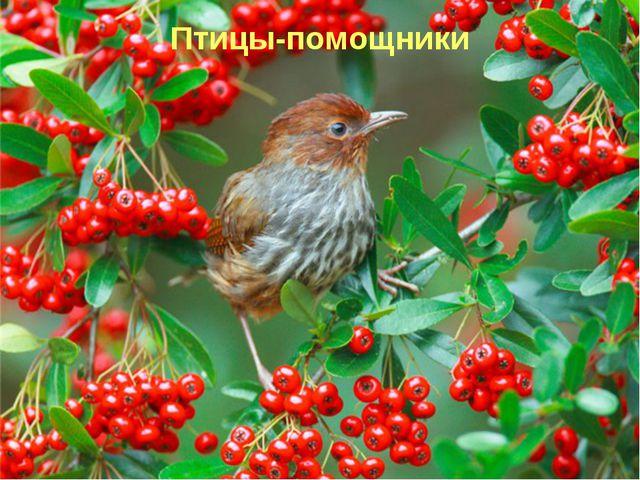 Птицы-помощники