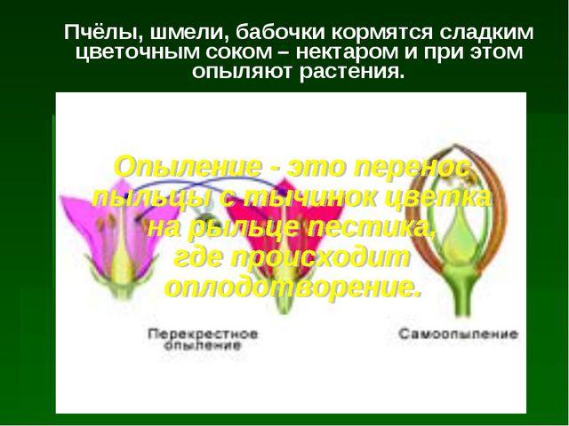 Пчёлы, шмели, бабочки кормятся сладким цветочным соком – нектаром и при этом...