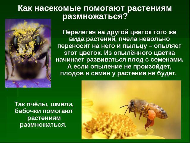 Как насекомые помогают растениям размножаться? Перелетая на другой цветок тог...