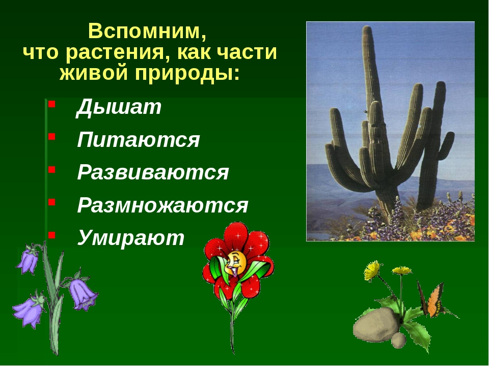 Вспомним, что растения, как части живой природы: Дышат Питаются Развиваются Р...