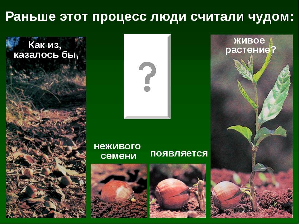 Раньше этот процесс люди считали чудом: Как из, казалось бы, неживого семени...