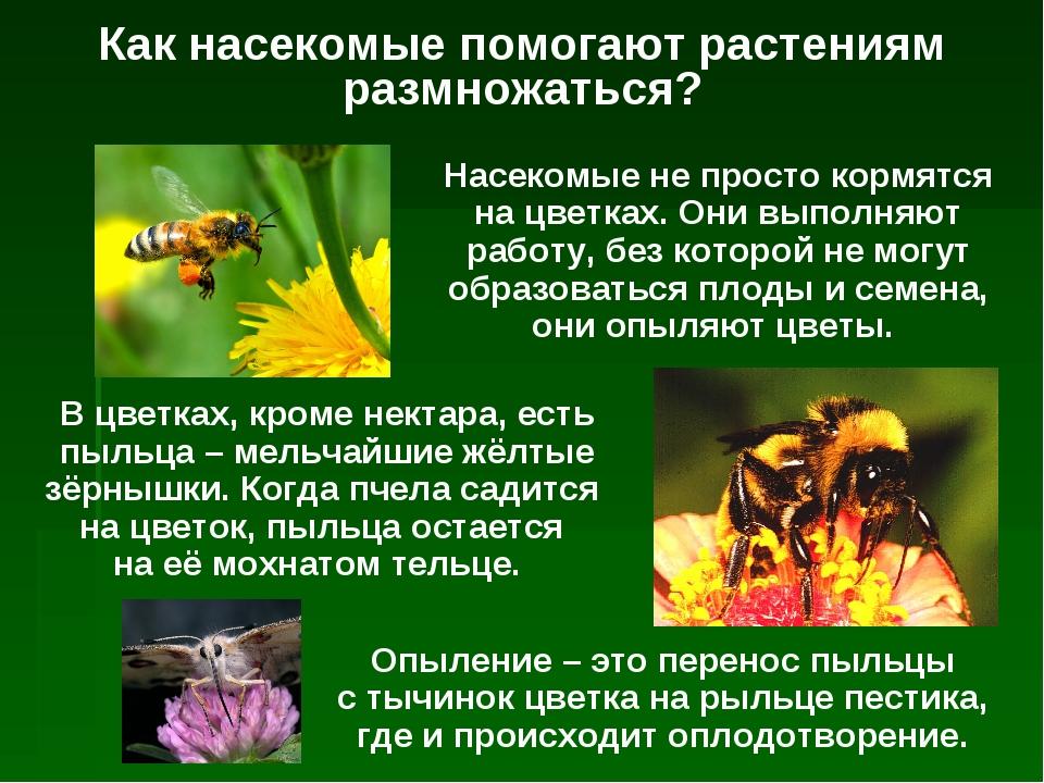 Как насекомые помогают растениям размножаться? Насекомые не просто кормятся н...