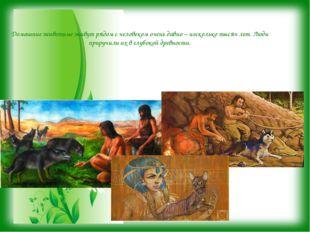 Домашние животные живут рядом с человеком очень давно – несколько тысяч лет.