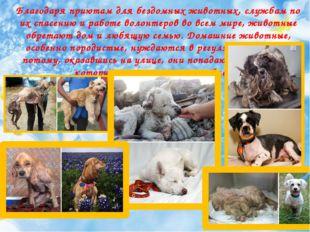 Благодаря приютам для бездомных животных, службам по их спасению и ра