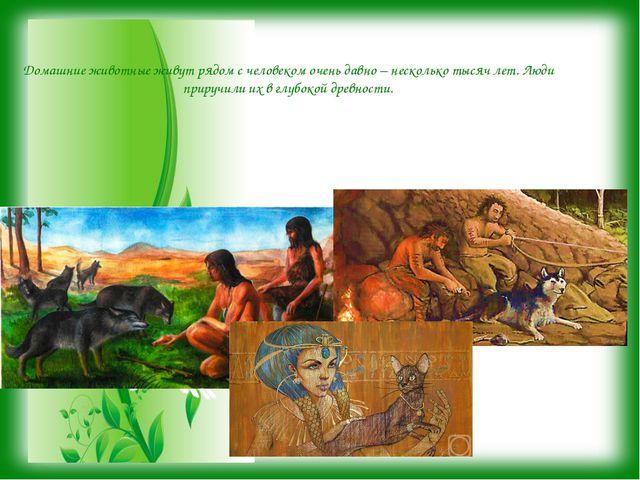 Домашние животные живут рядом с человеком очень давно – несколько тысяч лет....