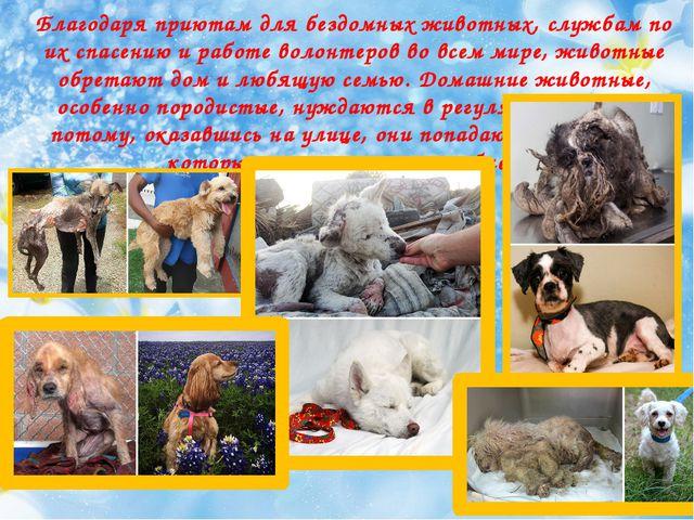Благодаря приютам для бездомных животных, службам по их спасению и ра...