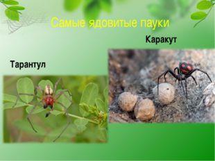 Самые ядовитые пауки Тарантул Каракут