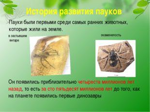 История развития пауков Пауки были первыми среди самых ранних животных, котор