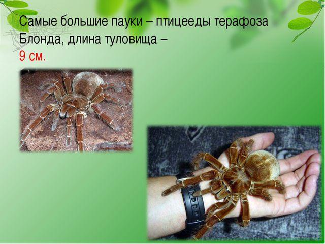 Самые большие пауки – птицееды терафоза Блонда, длина туловища – 9 см.