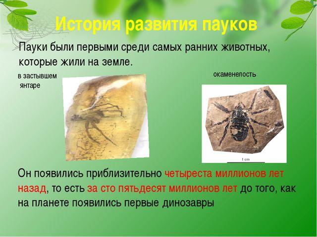 История развития пауков Пауки были первыми среди самых ранних животных, котор...