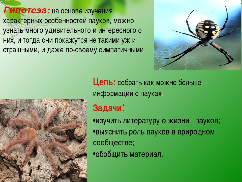 Цель: собрать как можно больше информации о пауках. Задачи: изучить литератур...