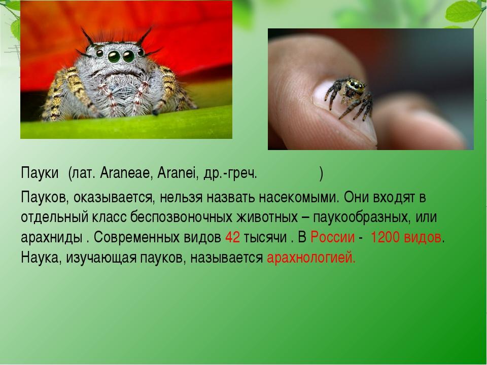 Пауки́ (лат. Araneae, Aranei, др.-греч. ἀράχνη) Пауков, оказывается, нельзя...