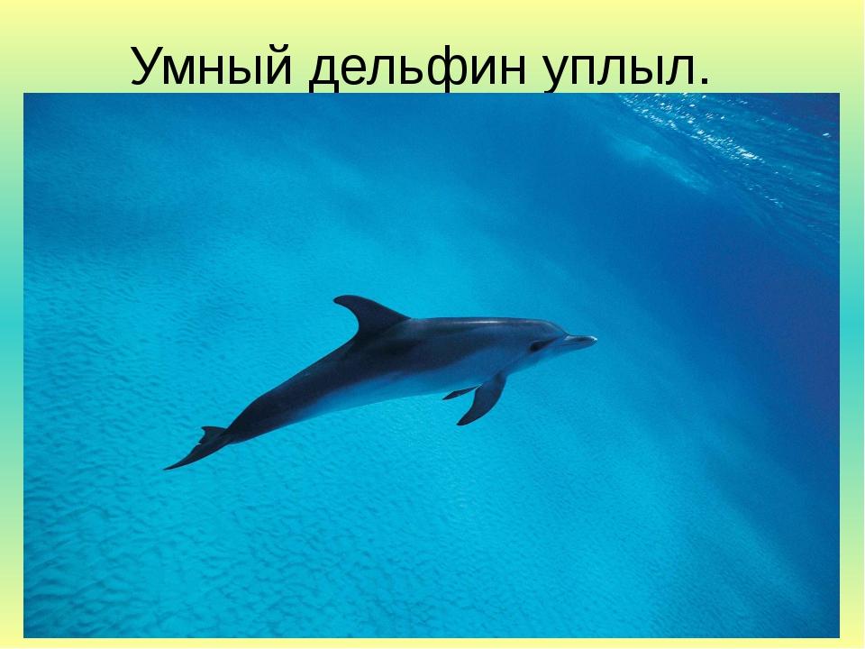 Умный дельфин уплыл.