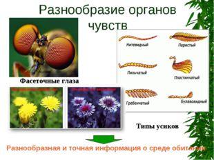 Разнообразие органов чувств Разнообразная и точная информация о среде обитани