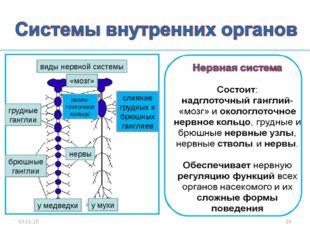* * виды нервной системы слияние грудных и брюшных ганглиев около- глоточное