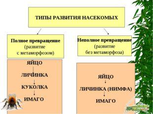 ТИПЫ РАЗВИТИЯ НАСЕКОМЫХ Полное превращение (развитие с метаморфозом) Неполное