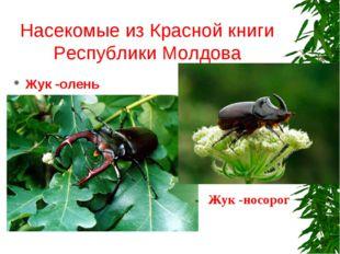 Насекомые из Красной книги Республики Молдова Жук -олень Жук -носорог
