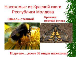 Насекомые из Красной книги Республики Молдова Шмель степной Бражник мертвая