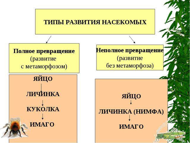 ТИПЫ РАЗВИТИЯ НАСЕКОМЫХ Полное превращение (развитие с метаморфозом) Неполное...